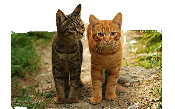 zugelaufene katzen nrw