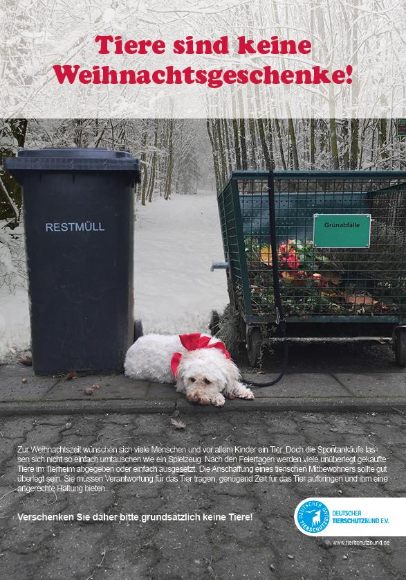 Tiere sind keine Weihnachtsgeschenke